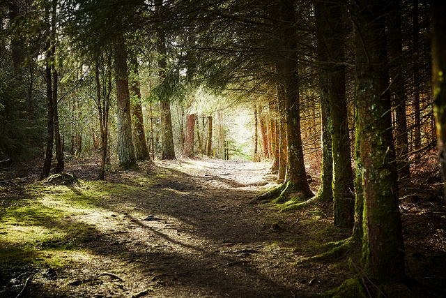 10 best things to do in the woods with your children by Forest Holidays