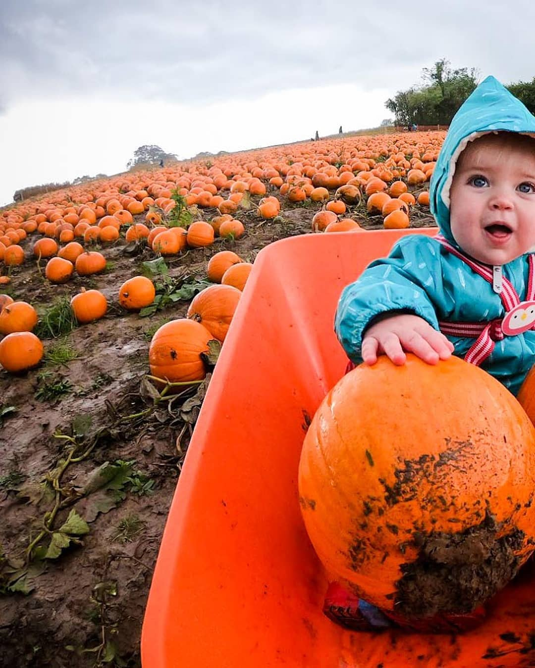 baby wearing scampsuit in pumkin patch